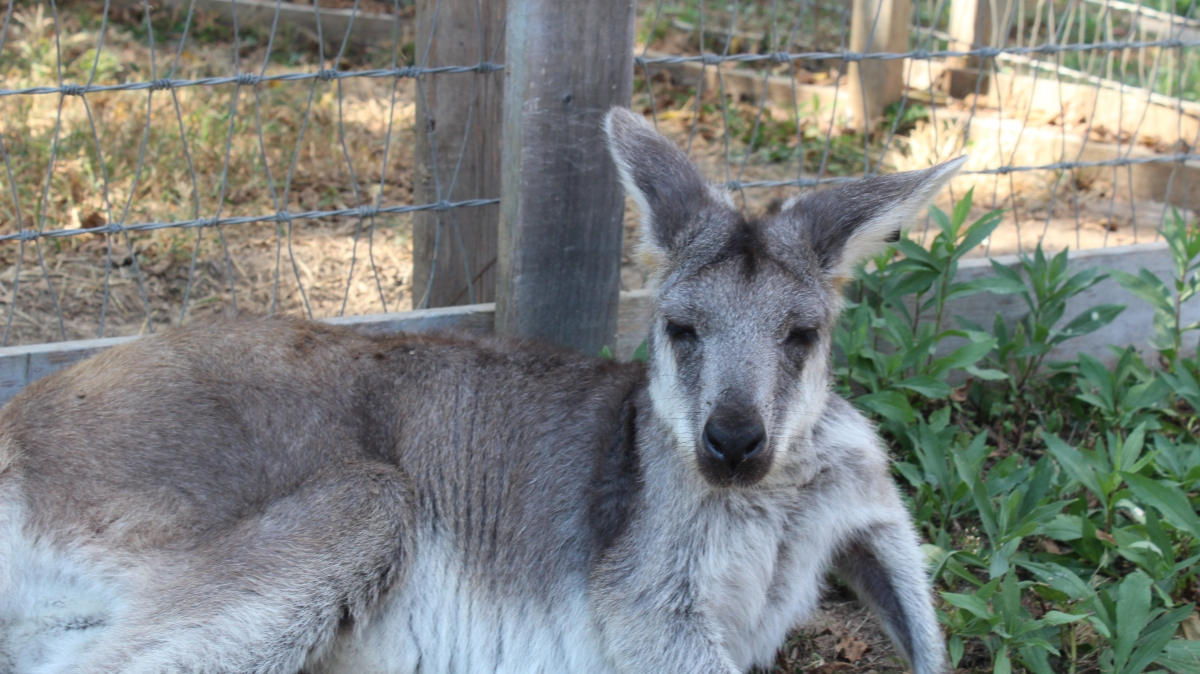 Photos of an Adorable Kangaroo from 09-27-19
